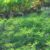 Korzyści stosowania nawozów zielonych