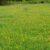 Znaczenie kultury łąk dla produkcji obornika