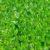Gospodarcze znaczenie nawozów zielonych