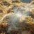 Produkcja nawozu przez fermentację