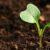O związkach węglowych rośliny i o próchnicy gleby