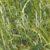 Ogólne wymagania roślin strączkowych